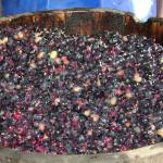 Rancho Arara Azul - Fabricação de Vinhos